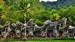 Tanah Toraja, Sulawesi, Indonesia (flowerikka) Tags: architecture indonesia sulawesi toraja ketekesu rantepao woddenhouses protomalaiien