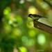 Bird on Dotted Bokeh