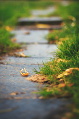Going with the Flow (marq4porsche) Tags: park orange color macro green wet field grass leaves work canon out flow 50mm leaf focus stream stair bokeh path 14 scene sidewalk step shallow depth pathway damp between 6d