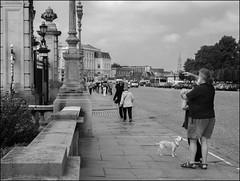 Vise au milieu! (chando*) Tags: brussels people woman dog chien man blackwhite photographer noiretblanc femme streetphotography bruxelles tourists palaisroyal royalpalace homme gens photographe touristes exploresept12014388