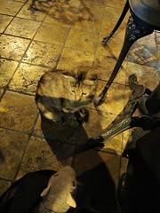 Rat makesa friend, visits the Cistern and has a good nights sleep (dw*c) Tags: trip travel turkey nikon rat istabul picmonkey
