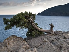 View of the Ayu-Dag, from the Cape Plaka. (Andrew J.Swan) Tags: ukraine crimea ajs ukr 2014  d90   18105vr