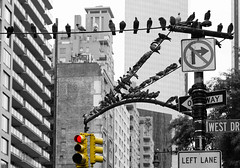for the birds (thebrooklyndodger) Tags: park new york city nyc white black color canon mark pigeons iii touch central 5d