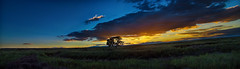 Out On The Red Top (Tom Herlyck) Tags: blue light sunset summer sky panorama mountains tree green beautiful field grass clouds drycreek amazing colorado exposure ditch arroyo lonetree highplains pueblocolorado exposureblend southeastcolorado redtopranch cloudsstormssunsetssunrises