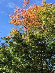 Signs of Fall (wxkeith) Tags: trees fall newjersey foliage princeton mercercounty