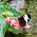"Butterfly Conservatory • <a style=""font-size:0.8em;"" href=""http://www.flickr.com/photos/25269451@N07/15209237609/"" target=""_blank"">View on Flickr</a>"