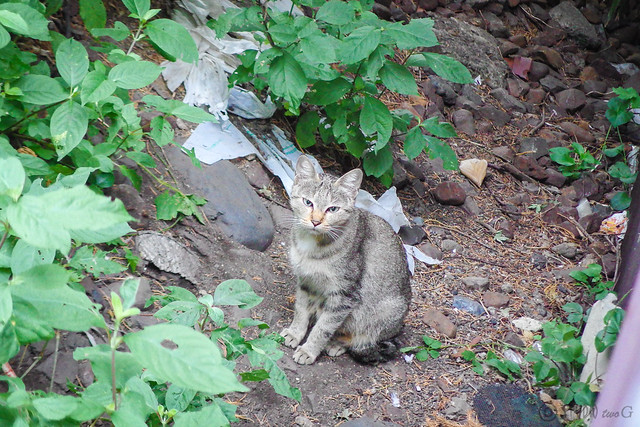Today's Cat@2014-09-30