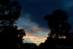 Texas Skys (gabii_benally) Tags: trees color love nature grass mushrooms berries mushroomhead perspective fungi skys blueberries berrys natureshots gabiisphotography gkbphotography