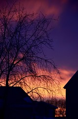 Wake Up (faithroxy) Tags: morning sunrise alberta sky weather winter silhouette trees tree dawn color