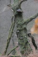 2017 - 6.2.2017 David Marshall Lodge Red Squirrel - Aberfoyle (9) (marie137) Tags: aberfoyle squirrel deer landscape waterfall hike walk terrain forest lodge cafe coffee outdoors camping bbq nature marie137 scotland mushroom trees fungi birds robin tit sculpture art ben gsd animal