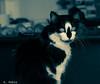 08032017-DSC_6396 (Fabian.Rubio) Tags: independencia santiago chile gatos gatita mascotas pets catlovers