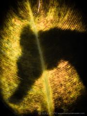 S H A D O W S (irwinunderwater) Tags: irwinunderwater irwinang irwinfansclub underwaterphotograhy scubadiving ocean diver nikonasia underwater uwphoto picoftheday potd diveindonesia natgeo macro lighting noodilab indonesia lombok creative underwaterworld seahorse shadows padi diverlife iamnikon instadive uwphotography