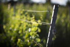 Vineyard (mexou) Tags: luxembourg wormeldange 135mmf2 koeppchen
