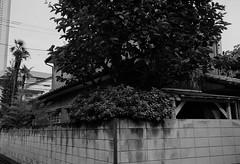 cle_summaron3535m_ILF_XP2 (2) (hironaca) Tags: street leica bw white black film japan 35mm tokyo aperture minolta iso400 super negative xp2 ilford wetzlar f35 cle summaron leitz