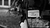 La memoria colectiva sangra en silencio (Pinedacion94) Tags: santiago bw white black tree art byn paper arbol book bellasartes foto sad message arte random letters feel libro triste letter feeling papel libros feelings mensaje baw bello whiteandblack instaart papelito