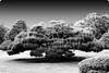 "bonsai (karakutaia) Tags: sun tree love nature japan paper temple japanese tokyo heart superb card e simply sogno rockpaper afotando ""flickraward"" flickrglobal elementsorganizer allbeautifulshotsandmanymoreilovenature flowerstampblackandwhite transeguzkilorestreetarturbanagreatshotthisisexcellentcontestmovementricohgxr""serendipitygroupbluenatureicapture flickraward5""j tra realtabstract"