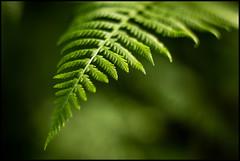 Fern (EML.photography) Tags: atlanta fern green atlantabotanicalgardens