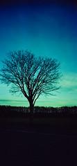Tree Pic... (Ricoh R1, Kodak Color 200 - expired 2001) (baumbaTz) Tags: march iso200 kodak r1 expired ricoh märz expiredfilm 2014 ricohr1 farbwelt 201403 kodakfarbwelt200