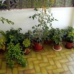 backporch-garden thumbnail