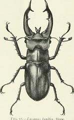 Anglų lietuvių žodynas. Žodis quercus incana reiškia <li>Quercus incana</li> lietuviškai.