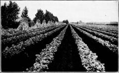 Anglų lietuvių žodynas. Žodis solanaceous vegetable reiškia solanaceous daržovių lietuviškai.