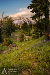 Mt Hood on the PCT (Jon Ares) Tags: sunset usa mountain oregon canon northwest alpine cascades pacificcresttrail wildflowers timberline