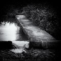 Ewelme watercress beds (Stuart Feurtado) Tags: blackandwhite water monochrome nikon stream foliage nik oxfordshire watercress weir oxon d600 ewelme silverefex