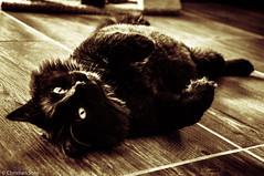 (http://sotochristian2.500px.com/) Tags: portrait pet pets black cat retrato gato mascota 18mm selfie