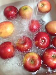 image (Paul Beppler) Tags: apple apfel ma pple rosaceae epple eppel ebble ppel rosengewchs bbel rosengewchse ebbel bble rosegewchs rosegewx