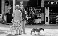 Meeting (pootlepod) Tags: street ladies blackandwhite dogs monochrome shopping photography cafe pavement meeting sidewalk leash talking chatting stphotographia