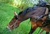 Regina (Gaia83) Tags: veterinarifotografi trekkingconimuli