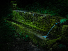 DSCF3342.jpg (DickerDackel) Tags: germany wasser brunnen natur wald badenwurttemberg djungel schwbischealb seeburg badurach albtrauf ermsursprung