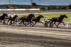 _MG_0215.jpg (Laila F.) Tags: horse oslo norway trav bjerke oslograndprix hestesport panonering