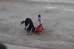 Sebastian Castella, corrida Bziers 2010 (louis.labbez) Tags: sport muscle sable cape passe corrida toro spectacle matador taureau afficionado pe tauromachie labbez torer