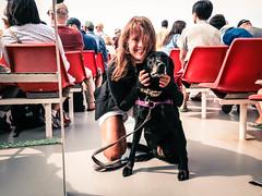 Island Queen Ferry Ride (LMGoBlue) Tags: dog ferry kate massachusetts blacklab marthasvineyard maddi oakbluffs islandqueen