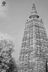India_0142