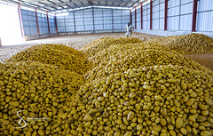 """Mountains of potatoes 
