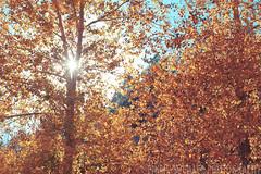 Finally, Autumn (Philip Michael Photo) Tags: autumn trees sunlight fall leaves yellow catchycolors golden colorado seasons estespark rooseveltnationalforest philipmichaelphotography