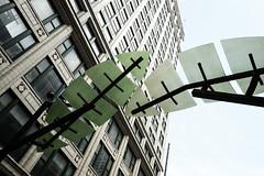 Palm Leaf Sculpture, Chicago (Sharon Mollerus) Tags: sculpture chicago tree green leaves palm publicart fc bulidings xss 20140901img5380chicagocr2