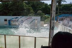 DSC_1583.jpg (d3_plus) Tags: sea sky nature field japan port aquarium countryside scenery dolphin chiba  ricefield       j4 choshi   fineday   bottlenosedolphin  fishingport   dolphinshow    nikon1    tokawa  1nikkorvr10100mmf456 1 nikon1j4  inubosakimarinepark