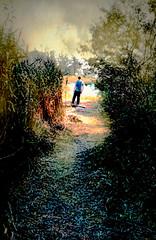 Wooded Path (floralgal) Tags: marshlandsconservancy ryenewyork westchestercountynewyork thewoodedpath painterlylandscape