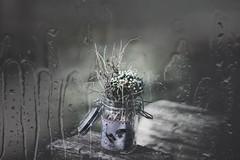 Rainy day (heike_hechelmann) Tags: rain smooth still vintage cyclop 1585 flower stillleben drops water glass vintagelens bokeh stilllife m42 sonya7ii sonyalpha