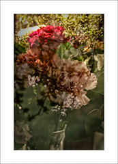A Mixed Bunch. (Mikec77) Tags: tripleexposure arty inandout mixedflowers