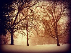 Blizzard Of 2017 (Christian Montone) Tags: montone christianmontone winter landscape snow newjersey nature snowstorm storm blizzard weather