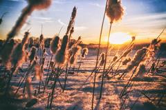 Power by Nature... (BigWhitePelican) Tags: helsinki finland vanhankaupunginlahti nature sun winter snow canoneos70d adobelightroom6 niktools 2017 march