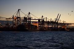 Port of Hamburg (Jacques Teller) Tags: hamburg germany harbour dawn cranes sunset nikond7200 jacquesteller port hafen hafenhamburg scenic scenery boat ferry