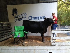 "Champion Heifer 4H Menard Co Fair '12 • <a style=""font-size:0.8em;"" href=""http://www.flickr.com/photos/25423792@N05/14251043037/"" target=""_blank"">View on Flickr</a>"
