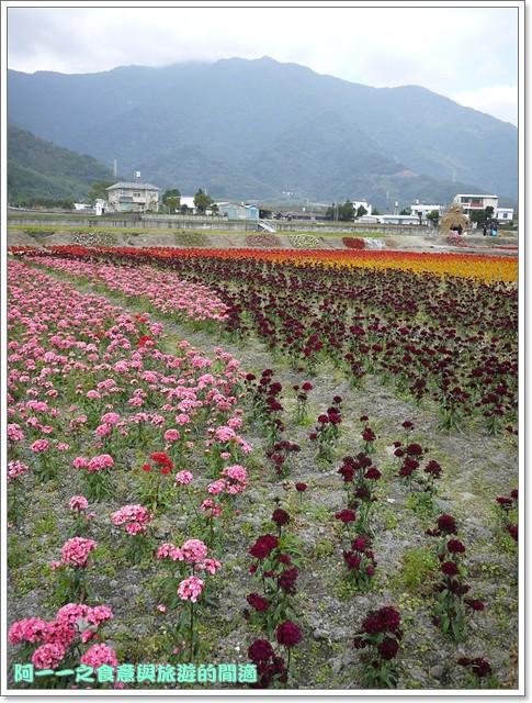 台東關山景點米國學校關山花海image007