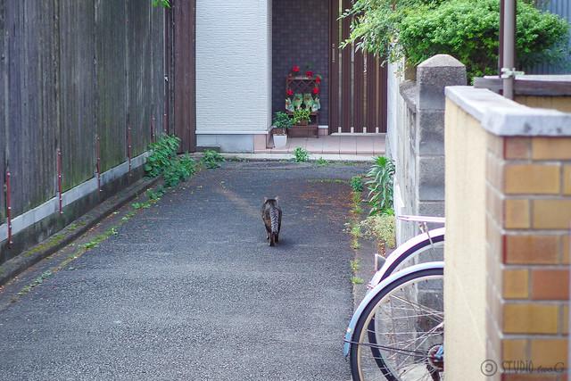 Today's Cat@2014-06-08