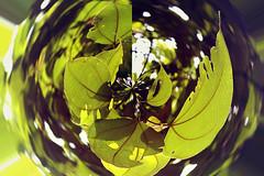 kaaaaaaaa (kat.rojo24) Tags: hipbotunsquare